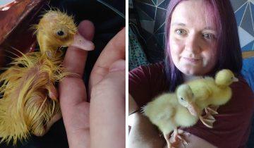 Девушка купила яица в магазине и провела эксперимент. Полученный результат явно лучше омлета!