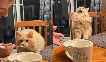 Кот первый раз попробовал мороженное — потрясающая реакция!