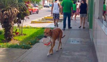 Собака сильно хотела пить…Она додумалась, как можно попросить у людей воды