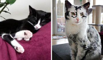 Девушка приютила двух кошек, одна из которых внезапно побелела