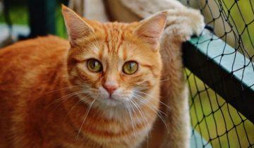 Как правильно вычёсывать кошку: основные советы