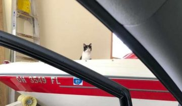 У девушки не было кота, но однажды она услышала в гараже громкое мяуканье…