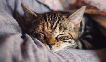 Как правильно помочь коту привыкнуть к новому дому