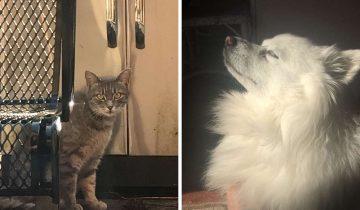 Кошка уже целый год ждёт погибшую подружку-собаку