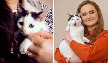 Девушка думала, что её кот погиб, но он нашёлся через 3 года
