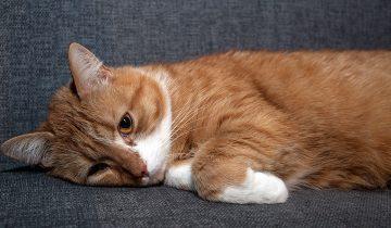 Мочекаменная болезнь у кошек: причины, основные симптомы и профилактика
