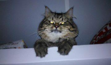 Что делать, если кошка постоянно будит вас по ночам?