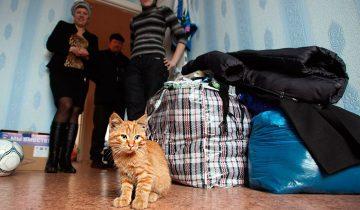 Помогаем кошке пережить сильный стресс от переезда