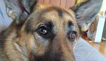 Поразительная история пса Бумера, который нашел себе новых хозяев