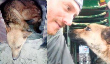 Чтобы спасти жизнь раненному псу мужчина пошел в непроходимые горы