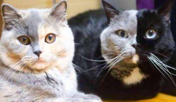 Как выглядят котята этой замечательной пары?