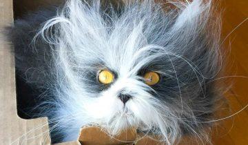 Котик Атчум с необычной внешностью покоряет просторы Интернета