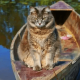 В период карантина кошка очень часто стала проводить время возле реки