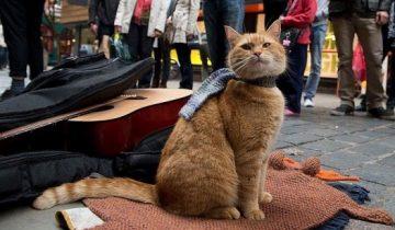 В Британии скончался кот Боб, когда-то спасший музыканта-наркомана