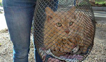 Владельцы завели чихуахуа, а пожилого кота выбросили на улицу