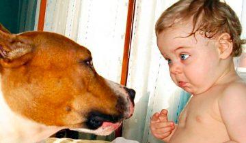 Кинологи советуют не дарить собак детям до 7 лет