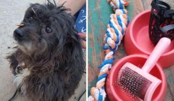 В Пскове владельцы избавились от собаки, жестоко привязав ее к дереву