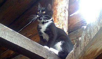 История о том, как городской кот в деревне отдыхал