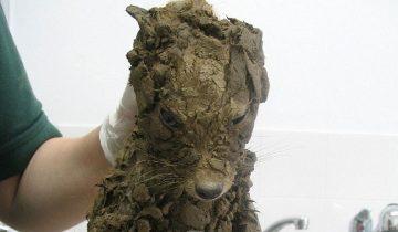 Никто не понимал, что это за животное, пока его не отмыли