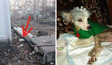 В Омске собаку с парализованными лапами оставили из теплотрассы