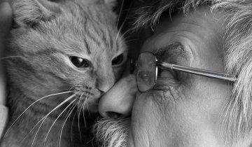 Как бездомная дворовая кошка отплатила добром за добро