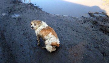 Собачка лежала на обочине дороги и молила о помощи людей