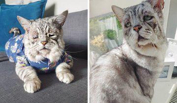 Кот выглядит как грустный старик, но внешность очень обманчива