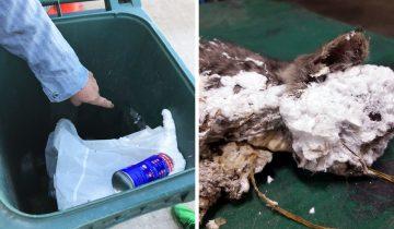 Котика измазали строительной пеной и выбросили в мусор
