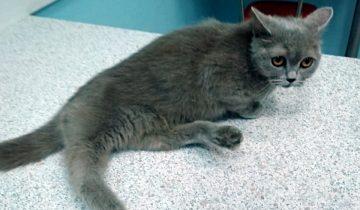 Кошку-инвалида посадили в коробку и выбросили из окна