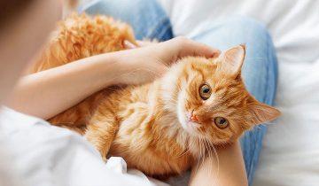 Почему кошки любят топтать людей лапками?