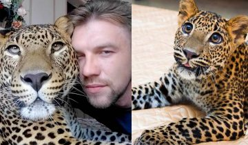 Парень решил выкупить больного детеныша леопарда из зоопарка. Теперь этот зверь живет у него