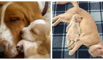 «Пусть мама услышит, пусть мама придет» — милая подборка фото мамочек животных