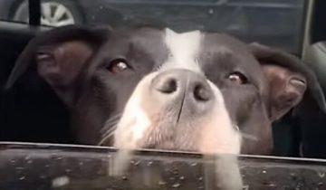 Во время прогулки в горах парень нашел собаку. Вскоре он вернулся домой с питомицей и щенками