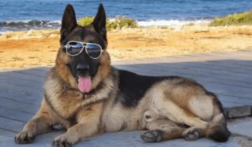 Этот пес унаследовал 80 миллионов долларов и ему купили дом Мадонны!