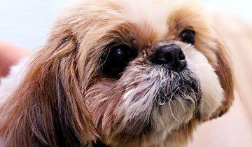 Ветеринары усыпили здорового песика, выполняя последнюю волю его хозяйки