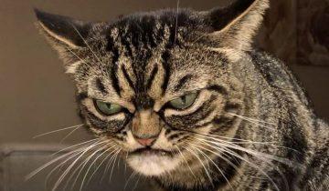 Кошка Grumpy Kitzia — наш новый любимый мем. Ее мимика поражает