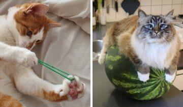 16 фото кошек, для которых совершенно не нужен повод, чтобы на них посмотреть