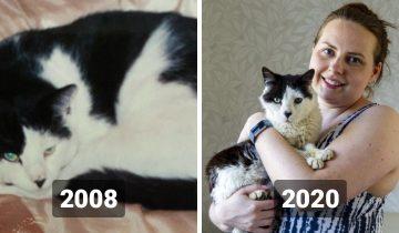 Девушка потеряла кота, когда ей было 19, и нашла только в 31. И это чудо!