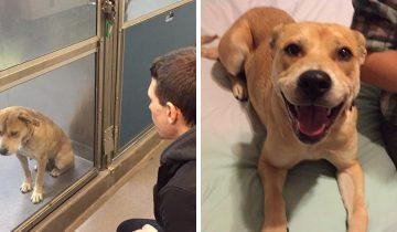 12 фото кошек и собак, которые нашли хозяина и стали во много раз счастливее