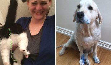 15 смешных случаев, когда животные испытали значение слова «провал»