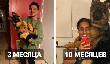 Люди в сети показали, как выросли их собаки, превратившись из щеночков в здоровенных коняшек