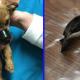 Парень спас щенка со скотчем на мордочке, брошенного под мостом