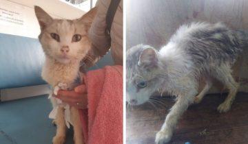 Худой старый кот из последних сил ковылял по улицам города