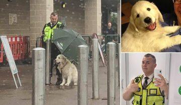 Поступок охранника, который укрыл чужую собаку зонтом, растрогал соцсети
