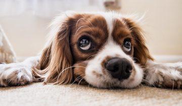 8 примеров, когда щенки выросли так, что их абсолютно не узнать