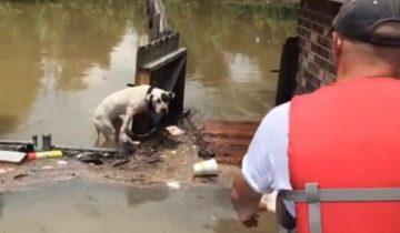 После наводнения две собаки смогли продержаться в воде 16 часов
