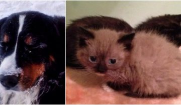 Собака в Омске спасла заживо похороненных котят