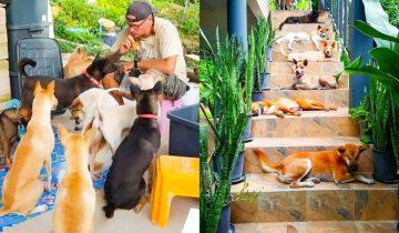 Пара приютила 15 бездомных собак, а они помогли им пережить потерю любимого питомца