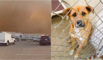 Полицейские быстро выносили животных из приюта, чтобы спасти их от сильного пожара