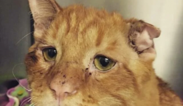 Кота спасли от усыпления и уже через час он преобразился в новом доме